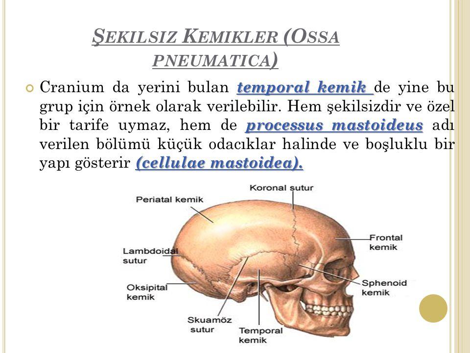 Ş EKILSIZ K EMIKLER (O SSA PNEUMATICA ) temporal kemik processus mastoideus (cellulae mastoidea).