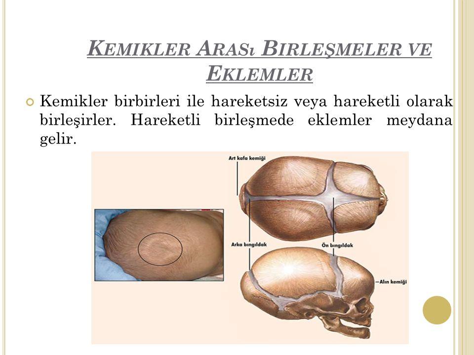 K EMIKLER A RASı B IRLEŞMELER VE E KLEMLER Kemikler birbirleri ile hareketsiz veya hareketli olarak birleşirler.