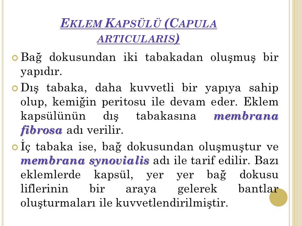 E KLEM K APSÜLÜ (C APULA ARTICULARIS ) Bağ dokusundan iki tabakadan oluşmuş bir yapıdır.