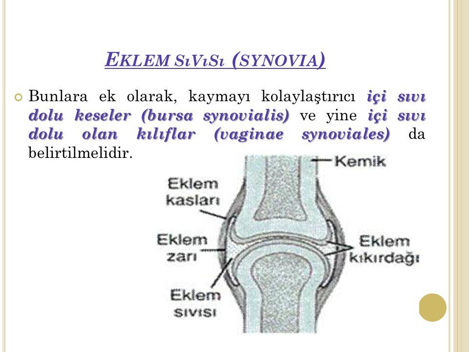E KLEM SıVıSı ( SYNOVIA ) içi sıvı dolu keseler (bursa synovialis) içi sıvı dolu olan kılıflar (vaginae synoviales) Bunlara ek olarak, kaymayı kolaylaştırıcı içi sıvı dolu keseler (bursa synovialis) ve yine içi sıvı dolu olan kılıflar (vaginae synoviales) da belirtilmelidir.