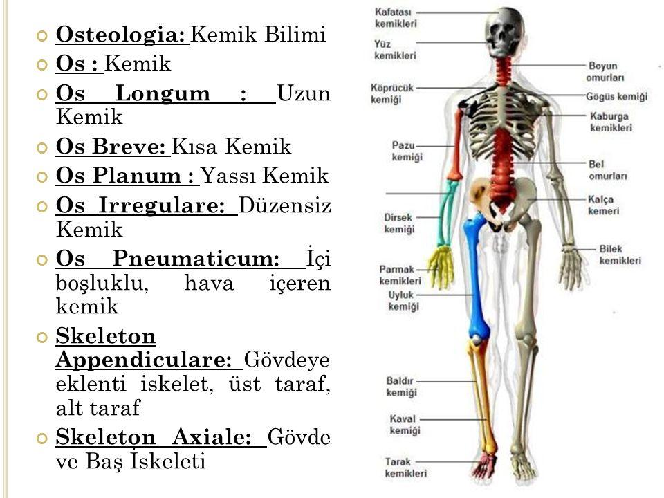 Osteologia: Kemik Bilimi Os : Kemik Os Longum : Uzun Kemik Os Breve: Kısa Kemik Os Planum : Yassı Kemik Os Irregulare: Düzensiz Kemik Os Pneumaticum: İçi boşluklu, hava içeren kemik Skeleton Appendiculare: Gövdeye eklenti iskelet, üst taraf, alt taraf Skeleton Axiale: Gövde ve Baş İskeleti