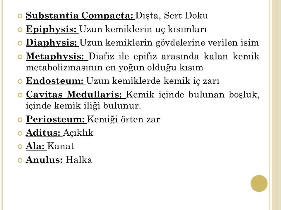 Substantia Compacta: Dışta, Sert Doku Epiphysis: Uzun kemiklerin uç kısımları Diaphysis: Uzun kemiklerin gövdelerine verilen isim Metaphysis: Diafiz ile epifiz arasında kalan kemik metabolizmasının en yoğun olduğu kısım Endosteum: Uzun kemiklerde kemik iç zarı Cavitas Medullaris: Kemik içinde bulunan boşluk, içinde kemik iliği bulunur.