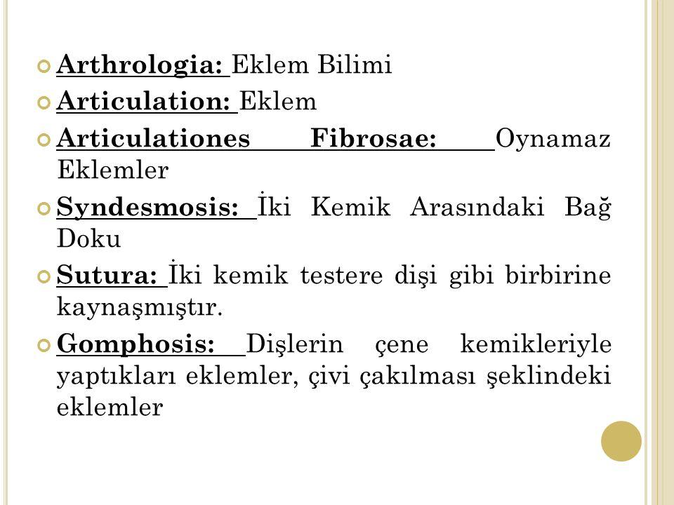 Arthrologia: Eklem Bilimi Articulation: Eklem Articulationes Fibrosae: Oynamaz Eklemler Syndesmosis: İki Kemik Arasındaki Bağ Doku Sutura: İki kemik testere dişi gibi birbirine kaynaşmıştır.