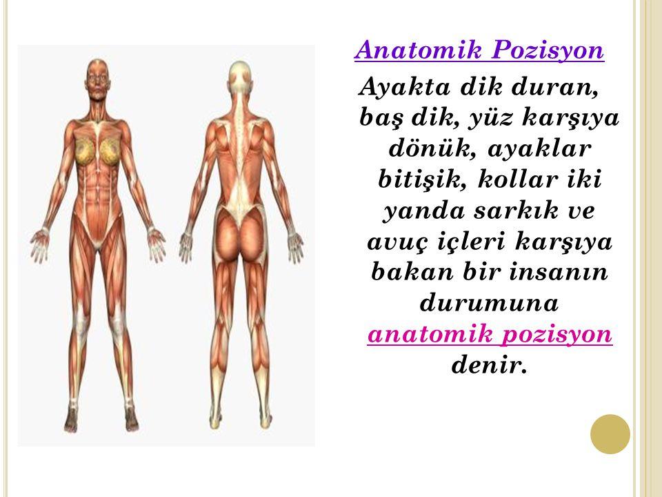 Anatomik Pozisyon Ayakta dik duran, baş dik, yüz karşıya dönük, ayaklar bitişik, kollar iki yanda sarkık ve avuç içleri karşıya bakan bir insanın durumuna anatomik pozisyon denir.