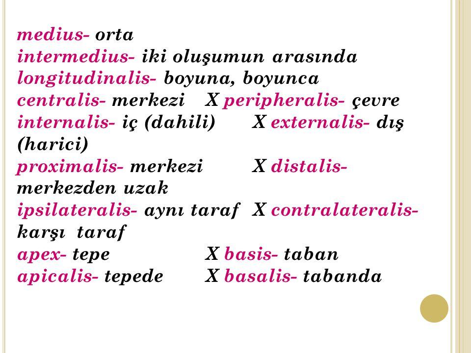 medius- orta intermedius- iki oluşumun arasında longitudinalis- boyuna, boyunca centralis- merkezi X peripheralis- çevre internalis- iç (dahili) X externalis- dış (harici) proximalis- merkezi X distalis- merkezden uzak ipsilateralis- aynı tarafX contralateralis- karşı taraf apex- tepe X basis- taban apicalis- tepede X basalis- tabanda