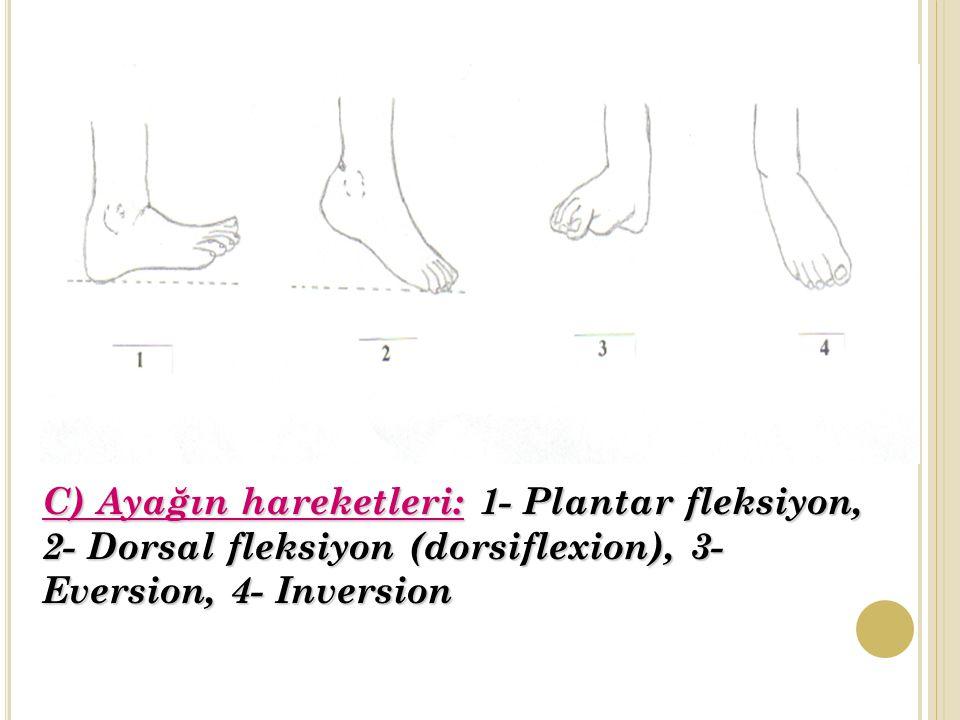 C) Ayağın hareketleri: 1- Plantar fleksiyon, 2- Dorsal fleksiyon (dorsiflexion), 3- Eversion, 4- Inversion