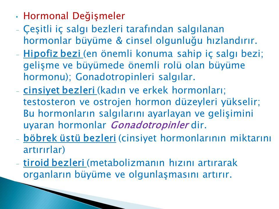 Hormonal Değişmeler - Çeşitli iç salgı bezleri tarafından salgılanan hormonlar büyüme & cinsel olgunluğu hızlandırır. - Hipofiz bezi (en önemli konuma