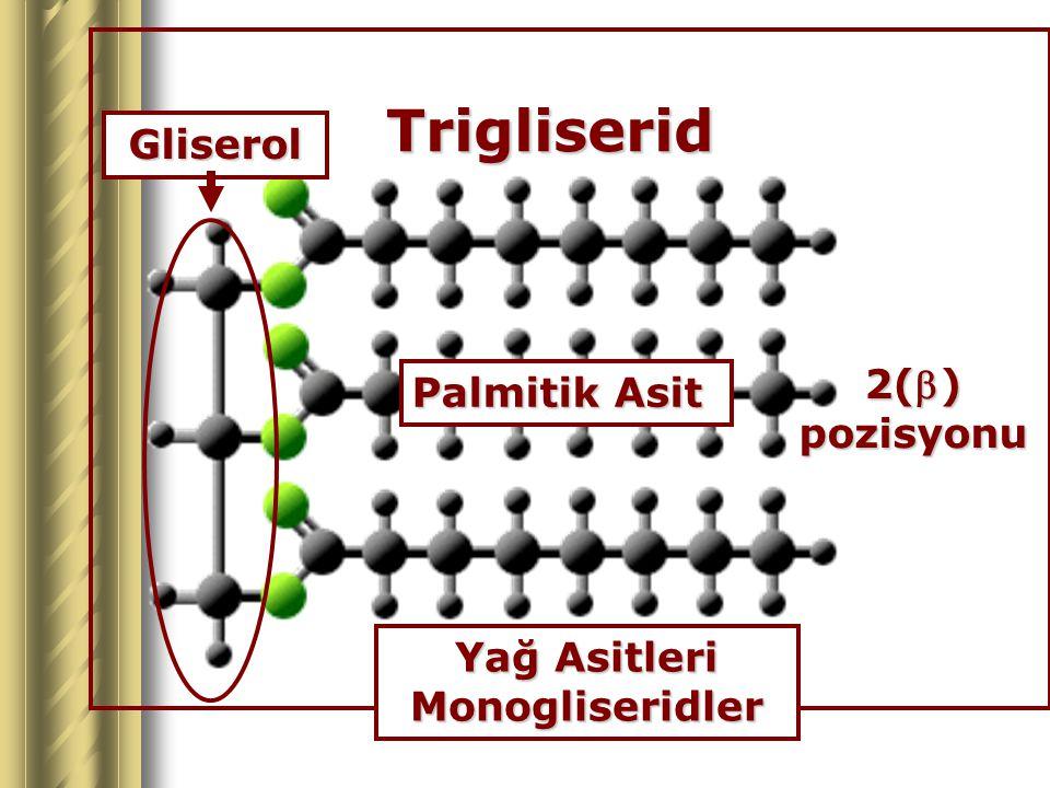 Trigliserid Gliserol Yağ Asitleri Monogliseridler 2() pozisyonu Palmitik Asit