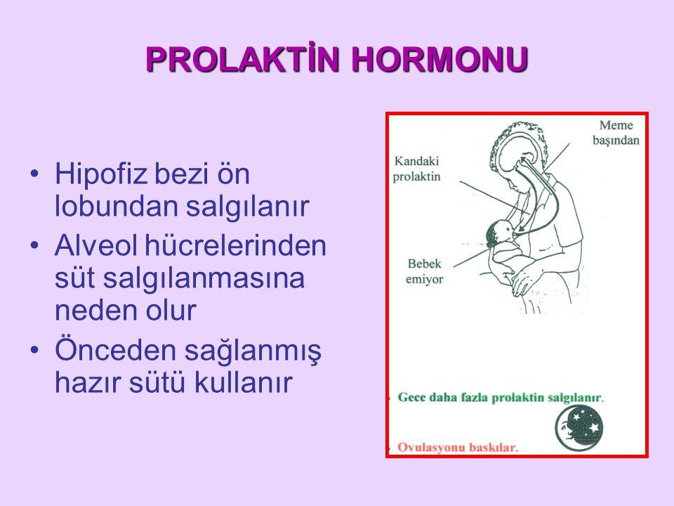 PROLAKTİN HORMONU Hipofiz bezi ön lobundan salgılanır Alveol hücrelerinden süt salgılanmasına neden olur Önceden sağlanmış hazır sütü kullanır