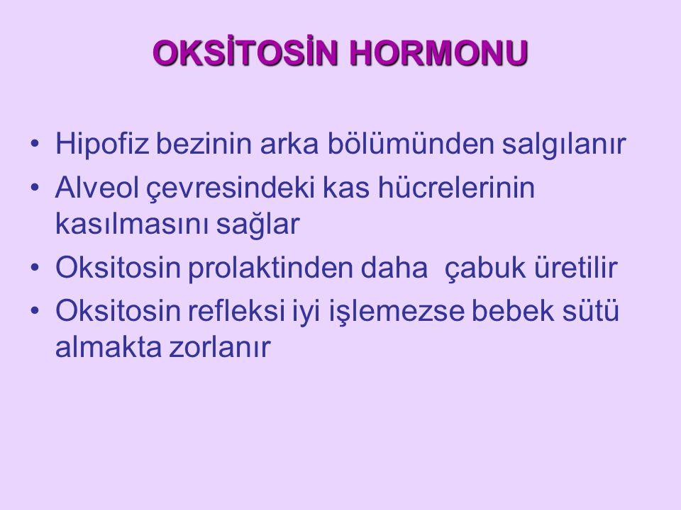 OKSİTOSİN HORMONU Hipofiz bezinin arka bölümünden salgılanır Alveol çevresindeki kas hücrelerinin kasılmasını sağlar Oksitosin prolaktinden daha çabuk