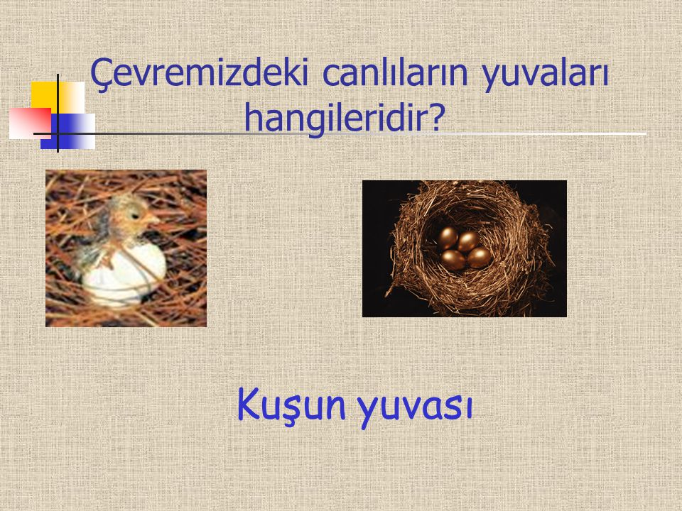 Çevremizdeki canlıların yuvaları hangileridir? Kuşun yuvası
