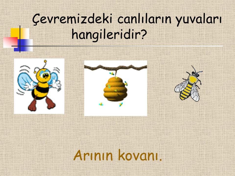 Çevremizdeki canlıların yuvaları hangileridir? Arının kovanı.