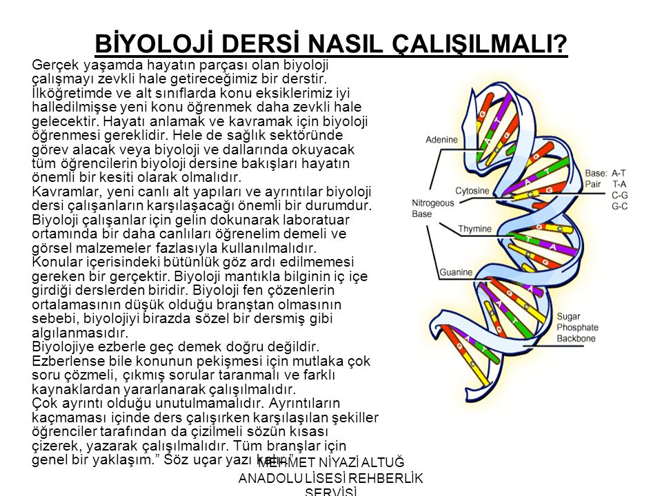 MEHMET NİYAZİ ALTUĞ ANADOLU LİSESİ REHBERLİK SERVİSİ BİYOLOJİ DERSİ NASIL ÇALIŞILMALI? Gerçek yaşamda hayatın parçası olan biyoloji çalışmayı zevkli h