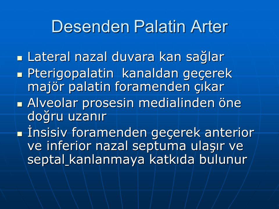 Desenden Palatin Arter Lateral nazal duvara kan sağlar Lateral nazal duvara kan sağlar Pterigopalatin kanaldan geçerek majör palatin foramenden çıkar Pterigopalatin kanaldan geçerek majör palatin foramenden çıkar Alveolar prosesin medialinden öne doğru uzanır Alveolar prosesin medialinden öne doğru uzanır İnsisiv foramenden geçerek anterior ve inferior nazal septuma ulaşır ve septal kanlanmaya katkıda bulunur İnsisiv foramenden geçerek anterior ve inferior nazal septuma ulaşır ve septal kanlanmaya katkıda bulunur