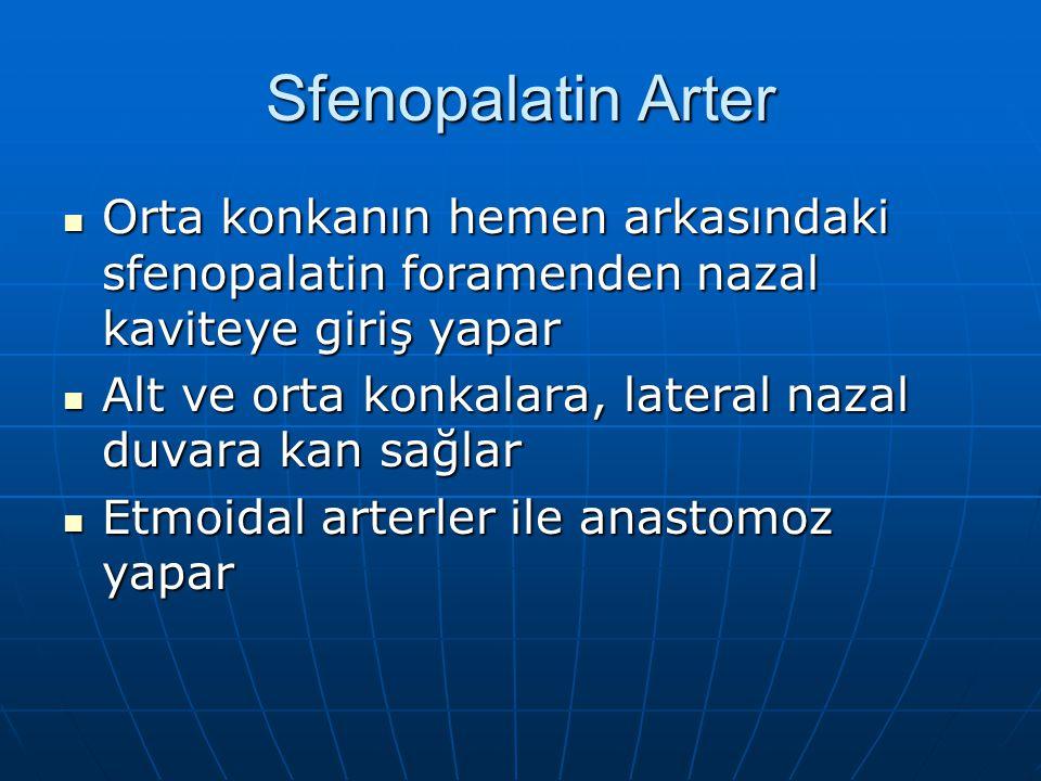 Sfenopalatin Arter Orta konkanın hemen arkasındaki sfenopalatin foramenden nazal kaviteye giriş yapar Orta konkanın hemen arkasındaki sfenopalatin foramenden nazal kaviteye giriş yapar Alt ve orta konkalara, lateral nazal duvara kan sağlar Alt ve orta konkalara, lateral nazal duvara kan sağlar Etmoidal arterler ile anastomoz yapar Etmoidal arterler ile anastomoz yapar