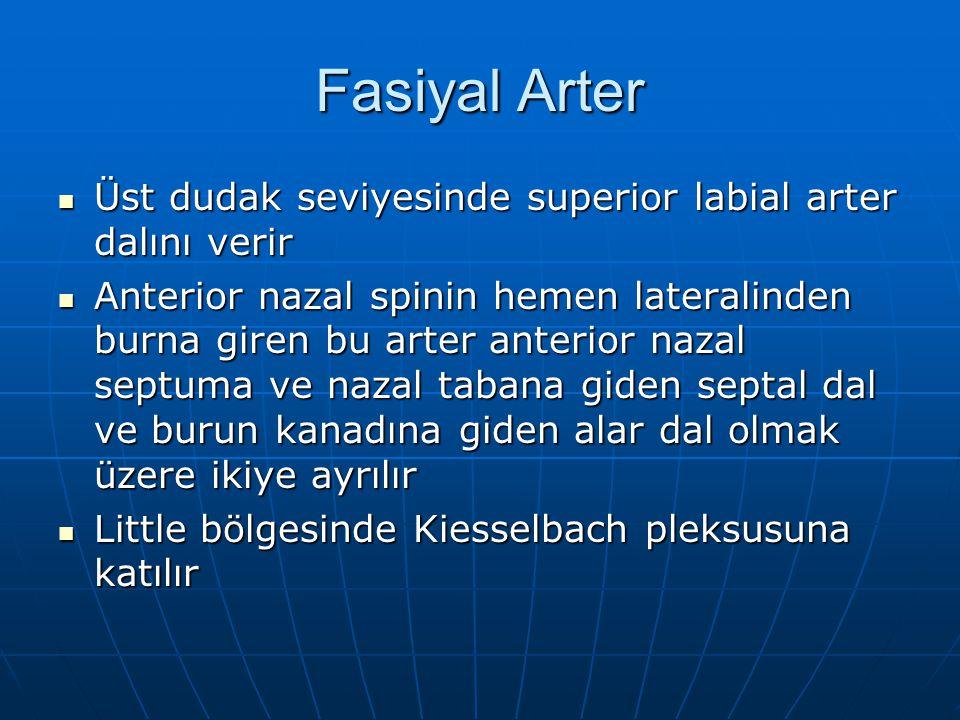 Fasiyal Arter Üst dudak seviyesinde superior labial arter dalını verir Üst dudak seviyesinde superior labial arter dalını verir Anterior nazal spinin
