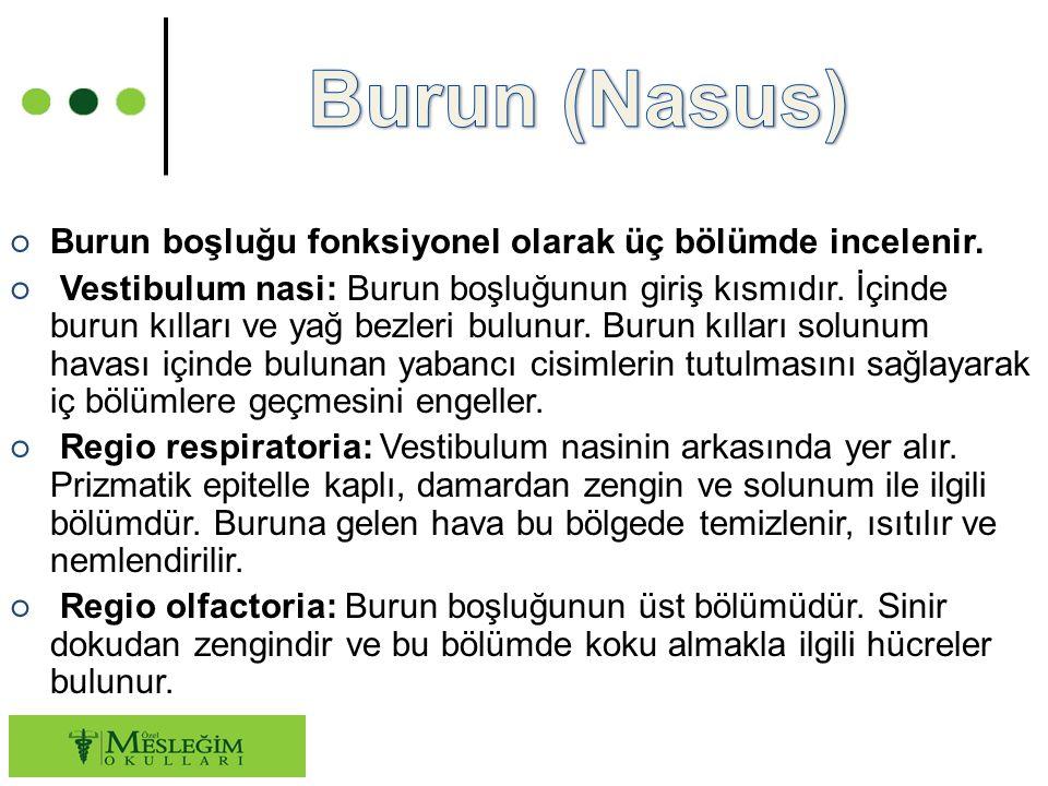 ○ Burun boşluğu fonksiyonel olarak üç bölümde incelenir.