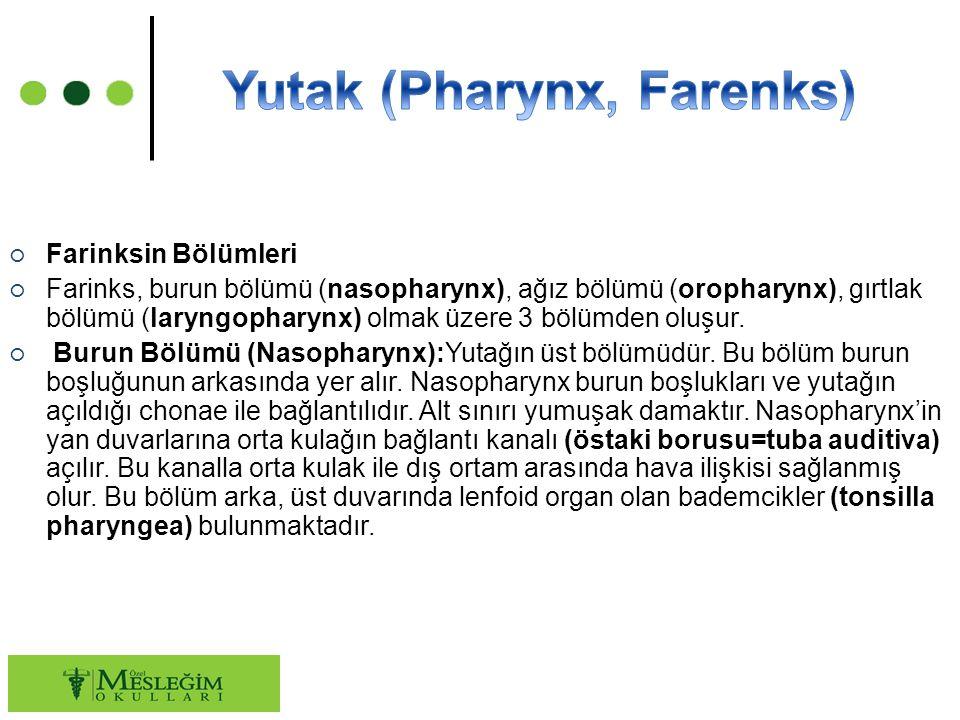 ○ Farinksin Bölümleri ○ Farinks, burun bölümü (nasopharynx), ağız bölümü (oropharynx), gırtlak bölümü (laryngopharynx) olmak üzere 3 bölümden oluşur.