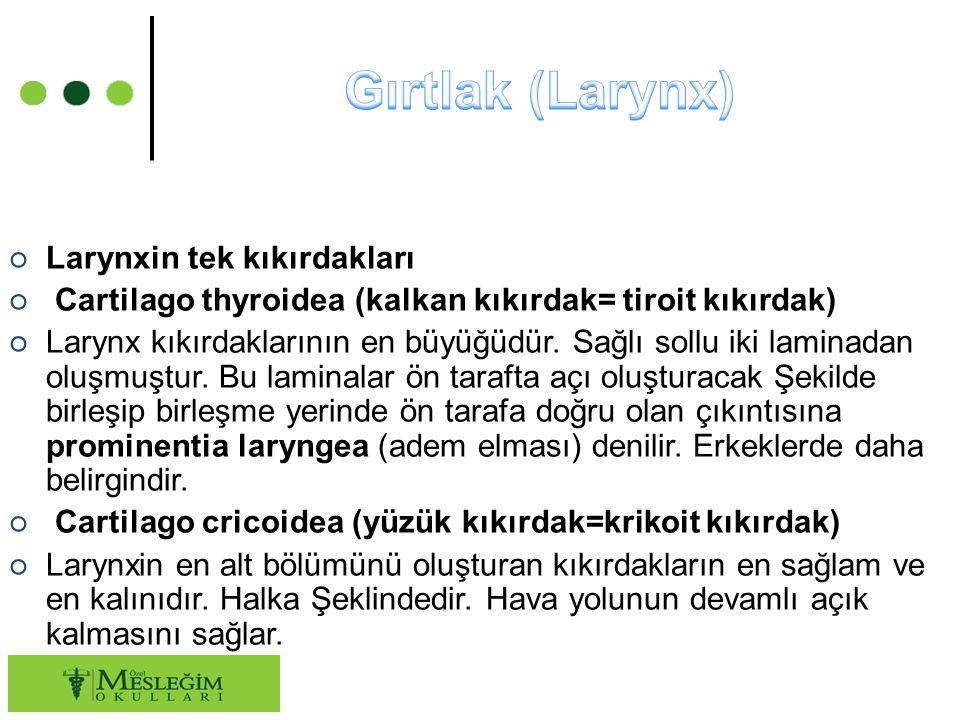○ Larynxin tek kıkırdakları ○ Cartilago thyroidea (kalkan kıkırdak= tiroit kıkırdak) ○ Larynx kıkırdaklarının en büyüğüdür.