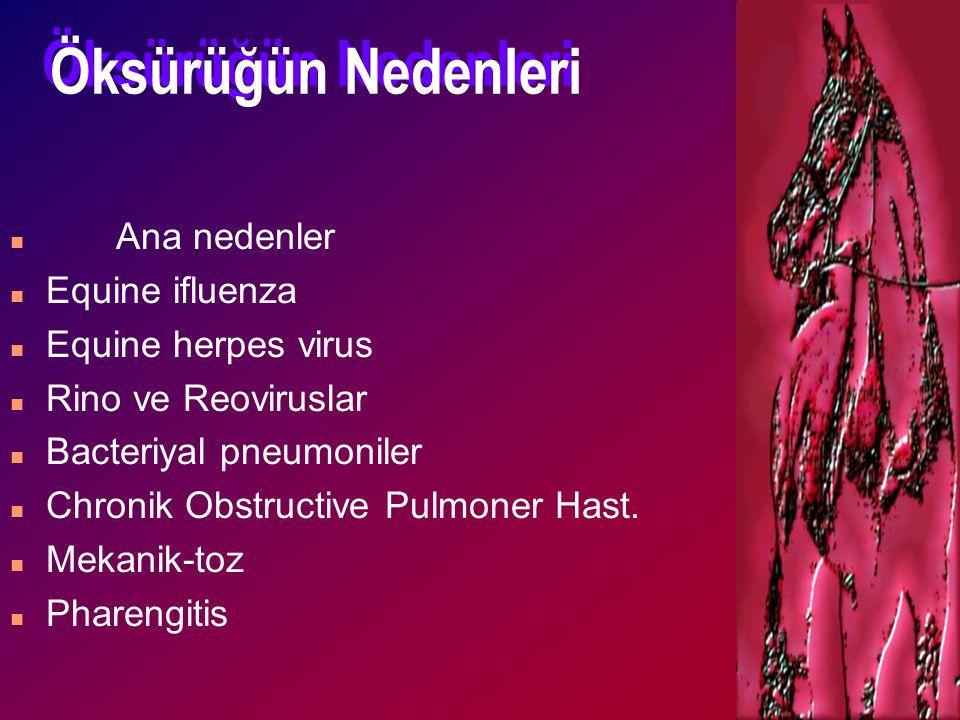 Öksürüğün Nedenleri n Ana nedenler n Equine ifluenza n Equine herpes virus n Rino ve Reoviruslar n Bacteriyal pneumoniler n Chronik Obstructive Pulmon