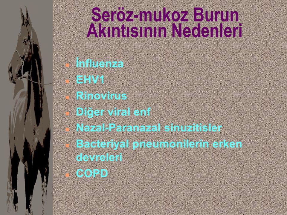 Seröz-mukoz Burun Akıntısının Nedenleri n İnfluenza n EHV1 n Rinovirus n Diğer viral enf n Nazal-Paranazal sinuzitisler n Bacteriyal pneumonilerin erk