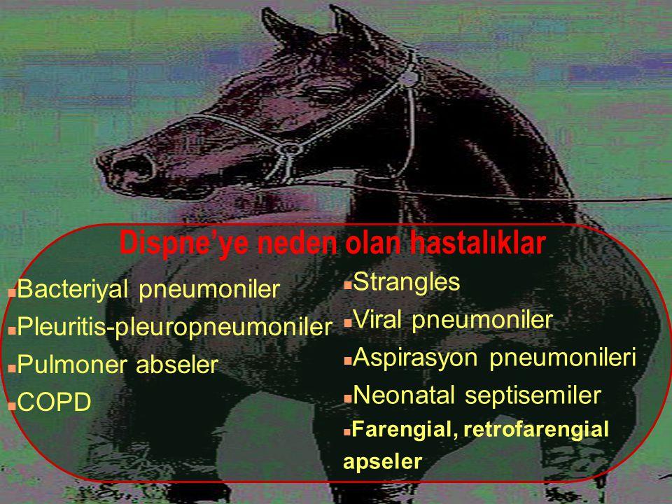 Dispne'ye neden olan hastalıklar n Bacteriyal pneumoniler n Pleuritis-pleuropneumoniler n Pulmoner abseler n COPD n Strangles n Viral pneumoniler n As