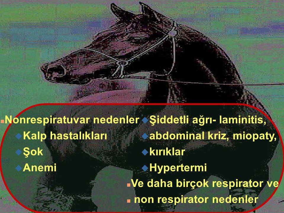 n Nonrespiratuvar nedenler u Kalp hastalıkları u Şok u Anemi u Şiddetli ağrı- laminitis, u abdominal kriz, miopaty, u kırıklar u Hypertermi n Ve daha
