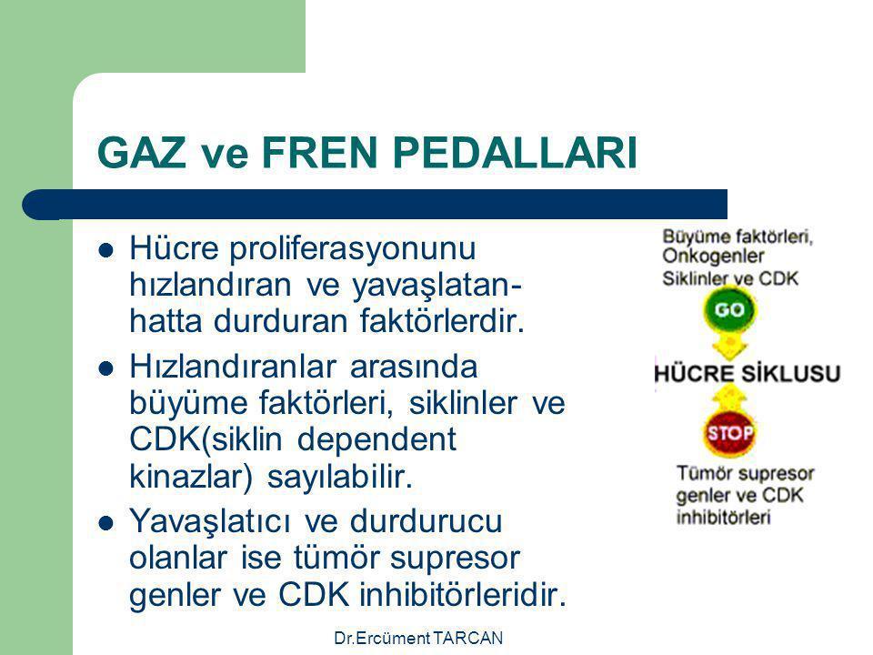 Dr.Ercüment TARCAN GAZ ve FREN PEDALLARI Hücre proliferasyonunu hızlandıran ve yavaşlatan- hatta durduran faktörlerdir. Hızlandıranlar arasında büyüme