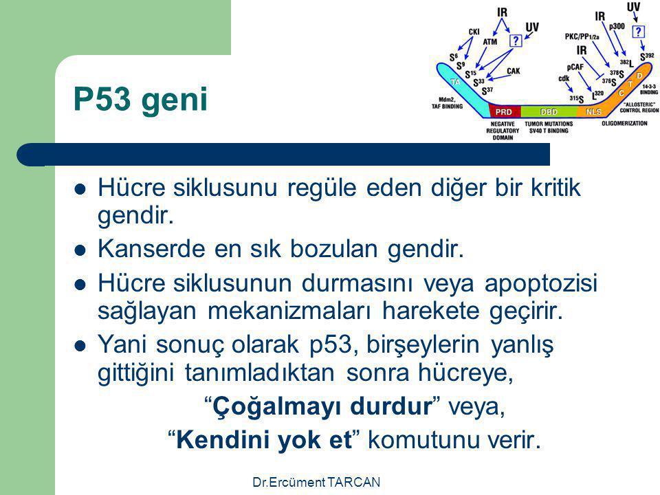 Dr.Ercüment TARCAN P53 geni Hücre siklusunu regüle eden diğer bir kritik gendir. Kanserde en sık bozulan gendir. Hücre siklusunun durmasını veya apopt