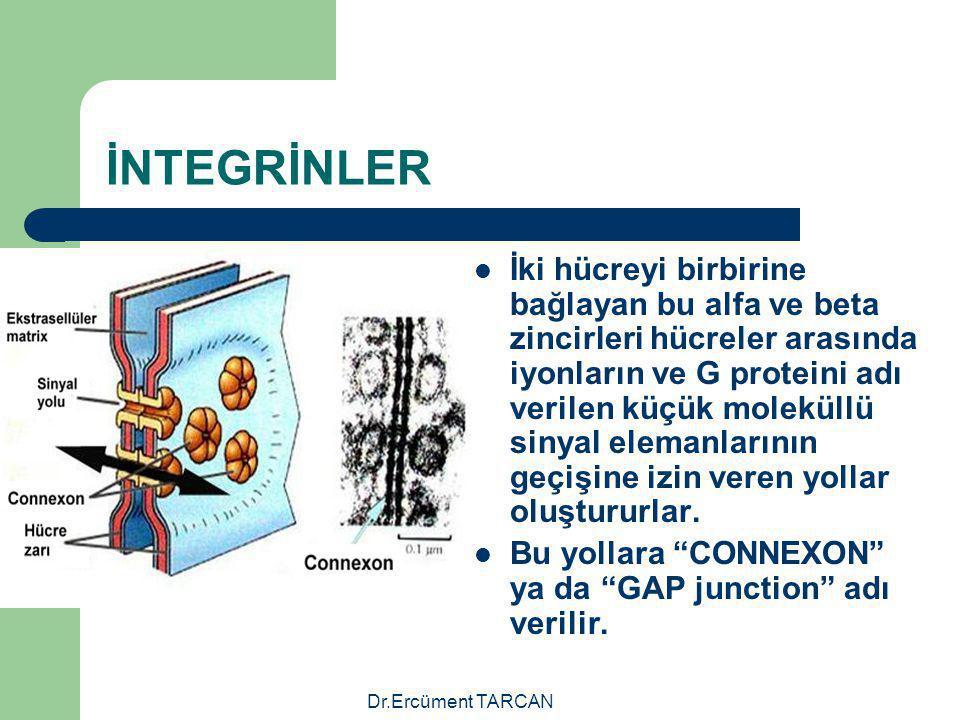 Dr.Ercüment TARCAN İNTEGRİNLER İki hücreyi birbirine bağlayan bu alfa ve beta zincirleri hücreler arasında iyonların ve G proteini adı verilen küçük m