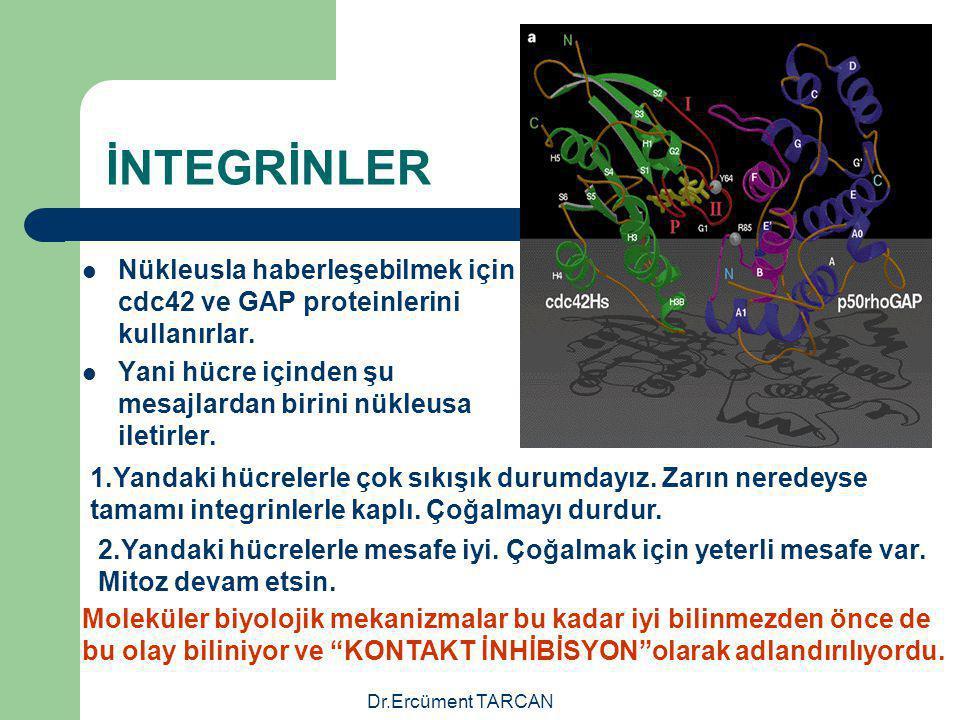 Dr.Ercüment TARCAN İNTEGRİNLER Nükleusla haberleşebilmek için cdc42 ve GAP proteinlerini kullanırlar. Yani hücre içinden şu mesajlardan birini nükleus