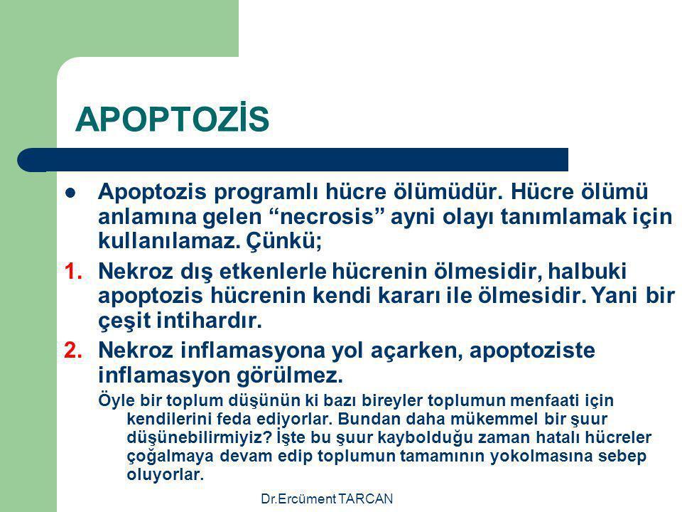 """Dr.Ercüment TARCAN APOPTOZİS Apoptozis programlı hücre ölümüdür. Hücre ölümü anlamına gelen """"necrosis"""" ayni olayı tanımlamak için kullanılamaz. Çünkü;"""