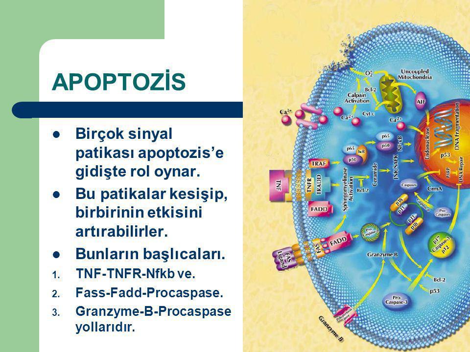 APOPTOZİS Birçok sinyal patikası apoptozis'e gidişte rol oynar. Bu patikalar kesişip, birbirinin etkisini artırabilirler. Bunların başlıcaları. 1. TNF
