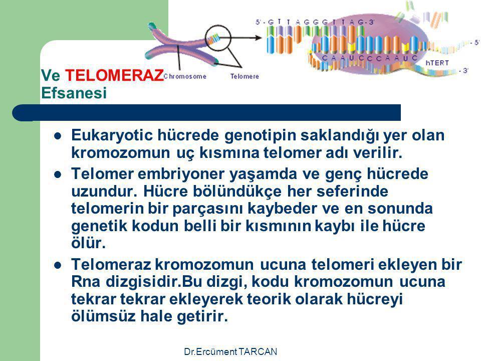 Dr.Ercüment TARCAN Ve TELOMERAZ Efsanesi Eukaryotic hücrede genotipin saklandığı yer olan kromozomun uç kısmına telomer adı verilir. Telomer embriyone
