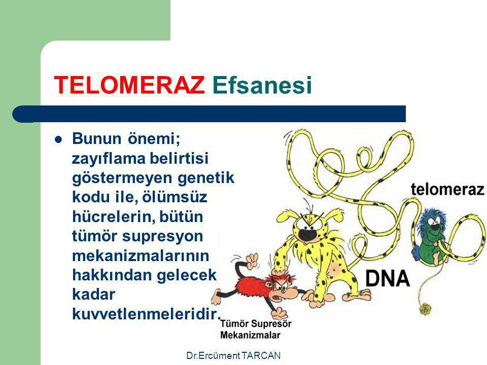 Dr.Ercüment TARCAN TELOMERAZ Efsanesi Bunun önemi; zayıflama belirtisi göstermeyen genetik kodu ile, ölümsüz hücrelerin, bütün tümör supresyon mekaniz