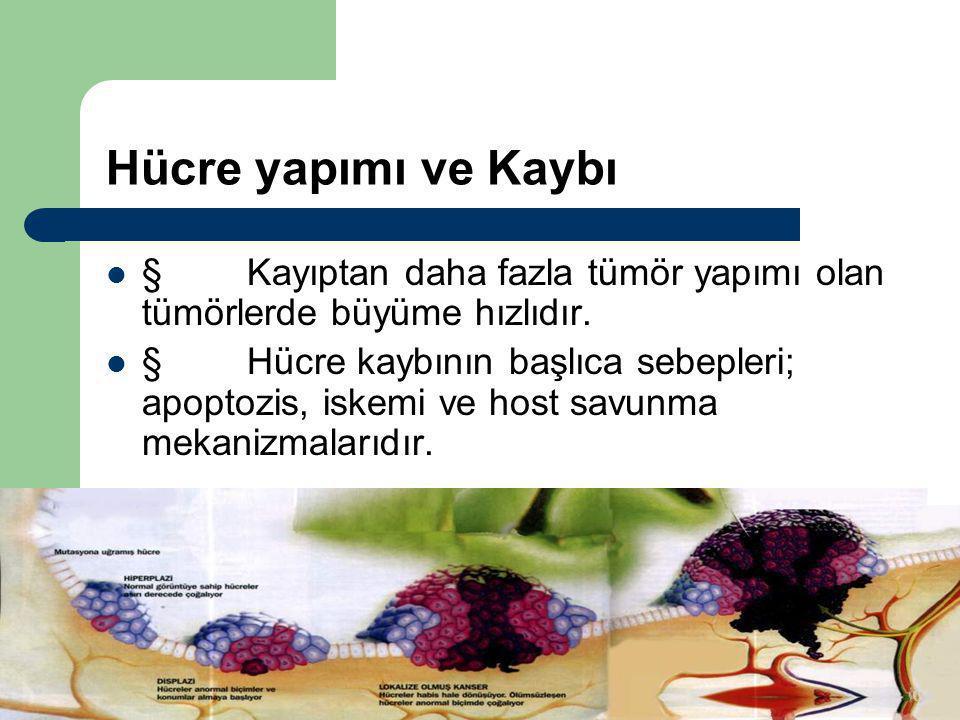 Dr.Ercüment TARCAN Hücre yapımı ve Kaybı  Kayıptan daha fazla tümör yapımı olan tümörlerde büyüme hızlıdır.  Hücre kaybının başlıca sebepleri; apopt