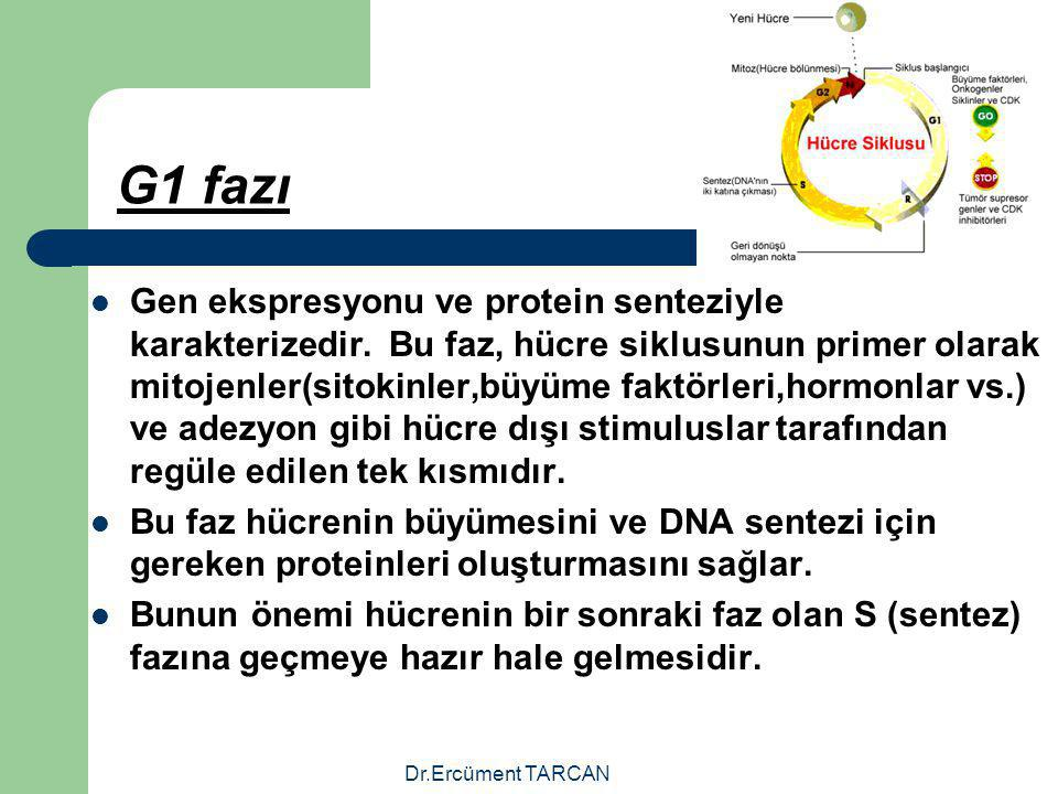 Dr.Ercüment TARCAN G1 fazı Gen ekspresyonu ve protein senteziyle karakterizedir. Bu faz, hücre siklusunun primer olarak mitojenler(sitokinler,büyüme f