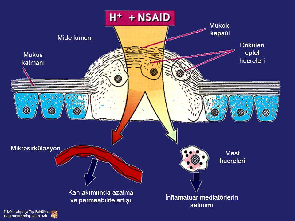 Mukus katmanı Kan akımıında azalma ve permaabilite artışı Mide lümeni Mukoid kapsül Dökülen eptel hücreleri İnflamatuar mediatörlerin salınımı Mikrosi
