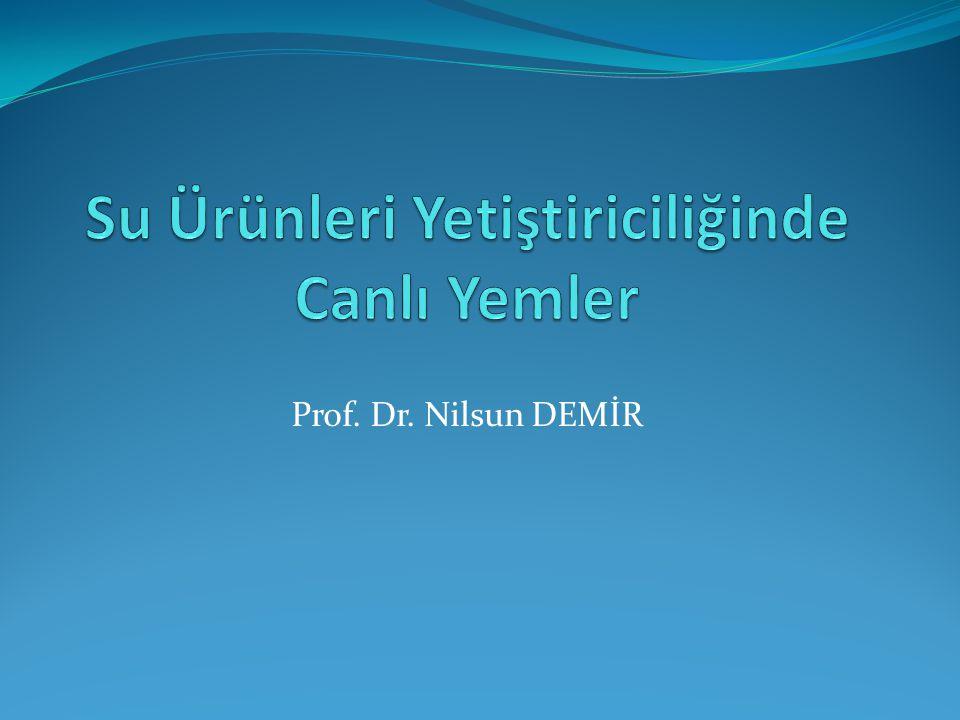 Prof. Dr. Nilsun DEMİR