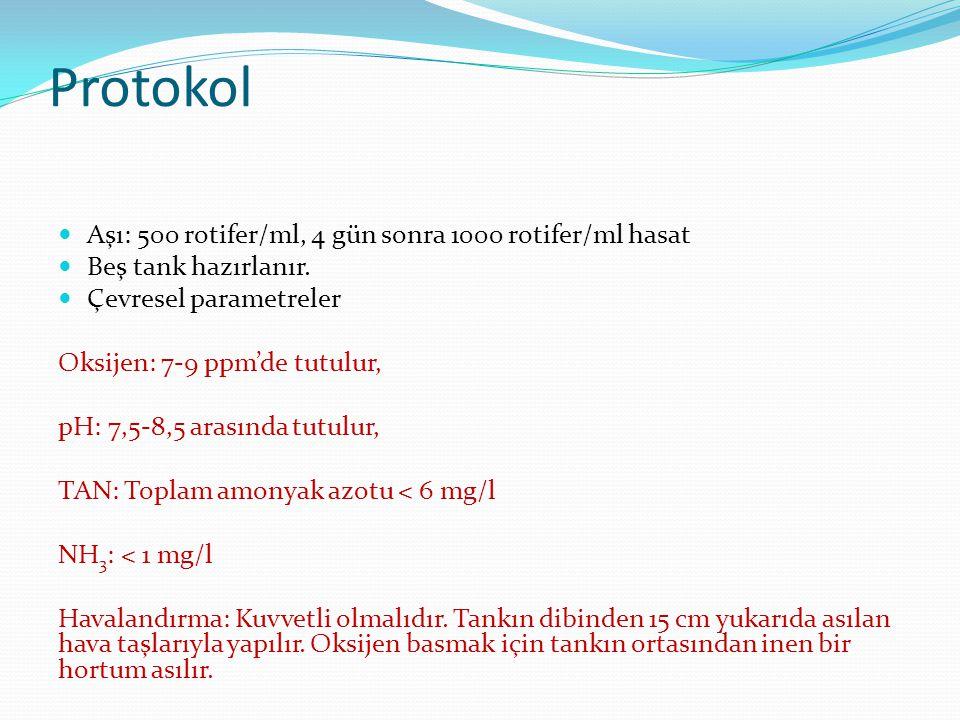 Protokol Aşı: 500 rotifer/ml, 4 gün sonra 1000 rotifer/ml hasat Beş tank hazırlanır. Çevresel parametreler Oksijen: 7-9 ppm'de tutulur, pH: 7,5-8,5 ar