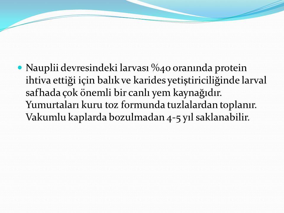Nauplii devresindeki larvası %40 oranında protein ihtiva ettiği için balık ve karides yetiştiriciliğinde larval safhada çok önemli bir canlı yem kayna