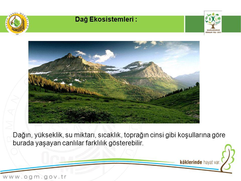 Dağın, yükseklik, su miktarı, sıcaklık, toprağın cinsi gibi koşullarına göre burada yaşayan canlılar farklılık gösterebilir.