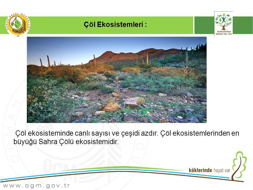 Çöl ekosisteminde canlı sayısı ve çeşidi azdır.