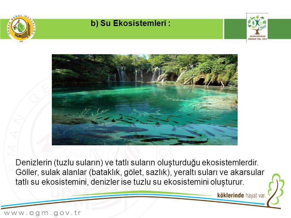 Denizlerin (tuzlu suların) ve tatlı suların oluşturduğu ekosistemlerdir.