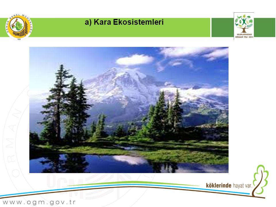 a) Kara Ekosistemleri