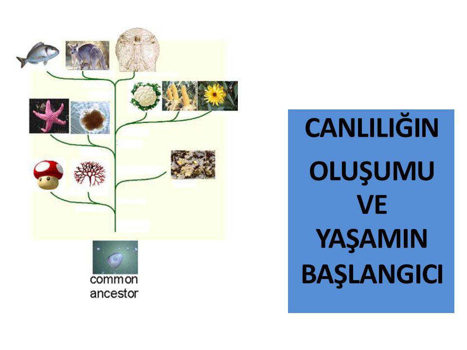CANLILIĞIN OLUŞUMU VE YAŞAMIN BAŞLANGICI Canlı Varlıklara Özgü Olgular 3)Düzenleyici mekanizmalar: Kanın pıhtılaşması, pozitif geri- beslemeye bir örnektir.
