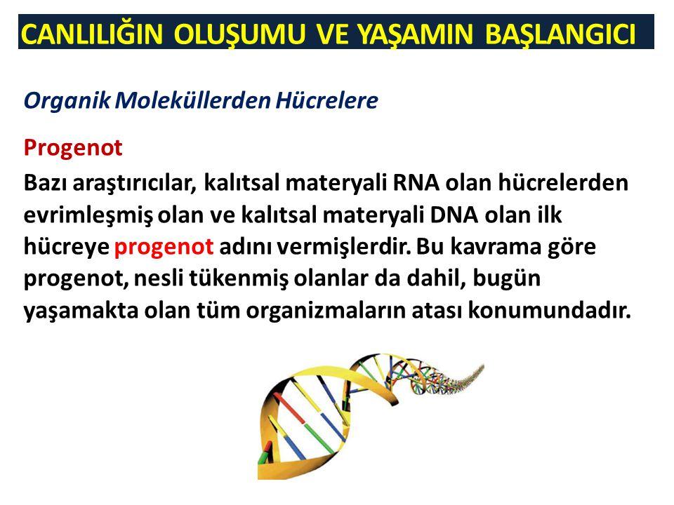 CANLILIĞIN OLUŞUMU VE YAŞAMIN BAŞLANGICI Organik Moleküllerden Hücrelere Progenot Bazı araştırıcılar, kalıtsal materyali RNA olan hücrelerden evrimleşmiş olan ve kalıtsal materyali DNA olan ilk hücreye progenot adını vermişlerdir.