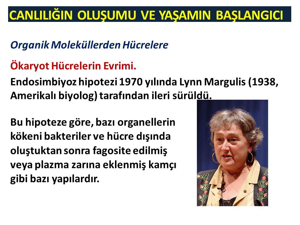 CANLILIĞIN OLUŞUMU VE YAŞAMIN BAŞLANGICI Organik Moleküllerden Hücrelere Ökaryot Hücrelerin Evrimi. Endosimbiyoz hipotezi 1970 yılında Lynn Margulis (