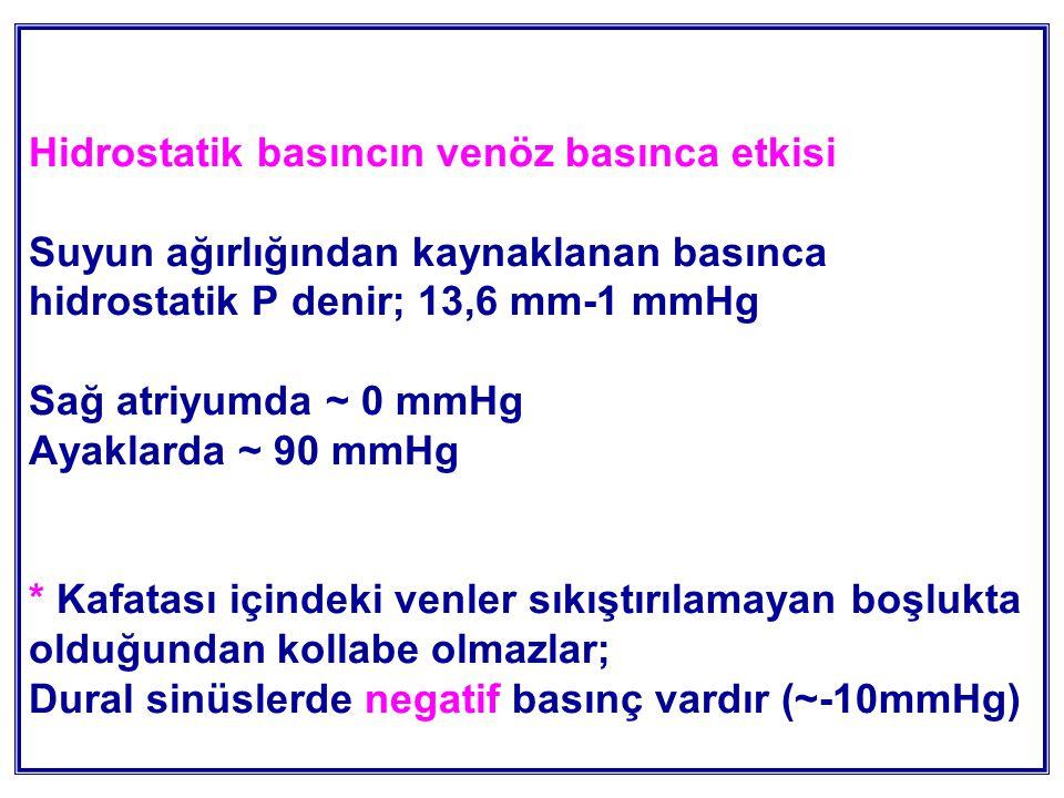 Hidrostatik basıncın venöz basınca etkisi Suyun ağırlığından kaynaklanan basınca hidrostatik P denir; 13,6 mm-1 mmHg Sağ atriyumda ~ 0 mmHg Ayaklarda