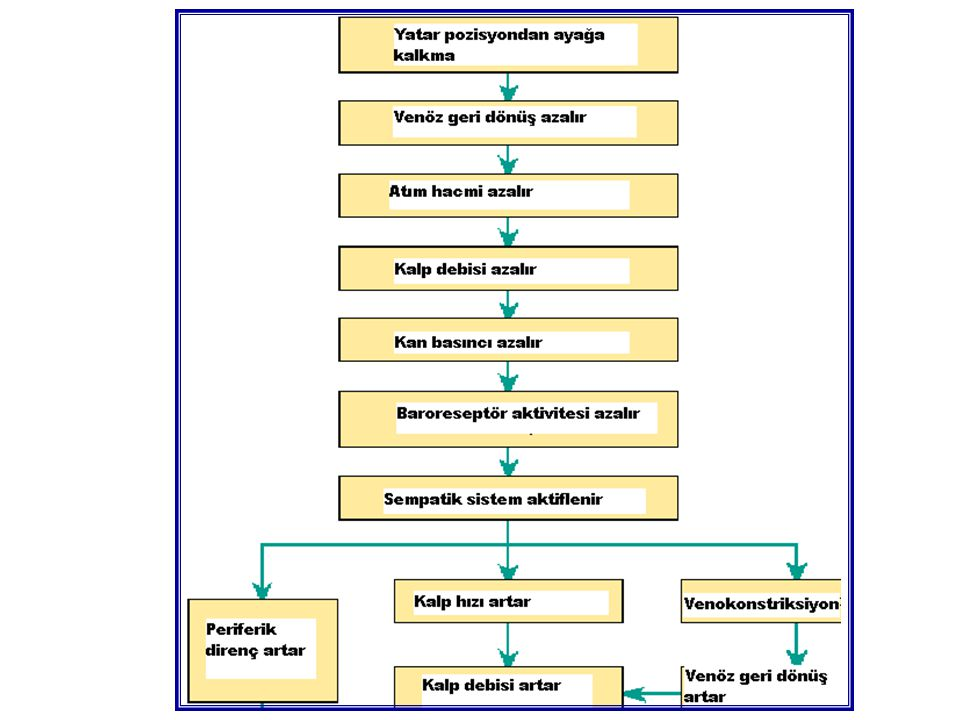 Normal Kalp Hipoefektif Kalp Hiperefektif Kalp Kalp Debisi (L/dak) Sol Atriyum basıncı (mmHg) KARDİYAK REZERV